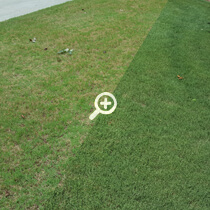 Atlanta Organic Lawn Care Before and After Dollar Spot by Simply Organic