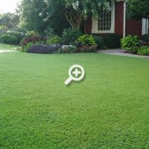 Pristine Atlanta Organic Lawn Care Results by Simply Organic