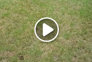 Dollar Spot treated by Atlanta Organic lawn care professionals at Simply Organic