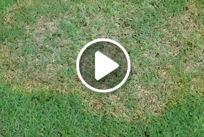Zoysia Patch Treated By Atlanta Organic Lawn Care Professionals At Simply