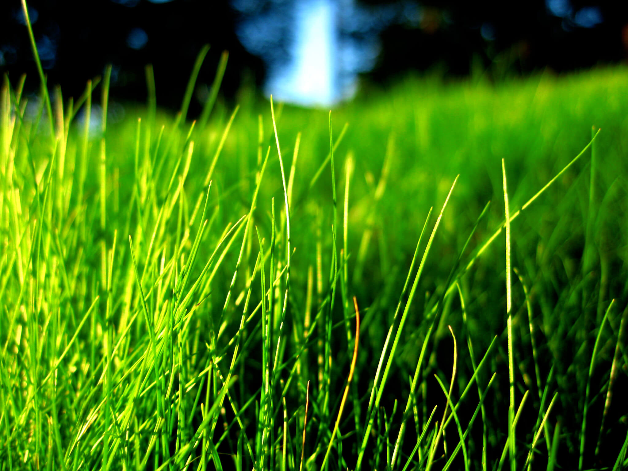 When It Comes To Choosing A Gr Type Suitable For Atlanta S Climate There Are Variety Of Options Available Many Homeowners Choose Fescue As Their Turf